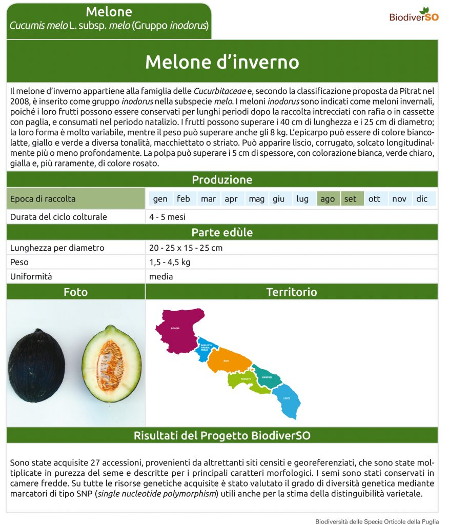 melone-dinverno-1