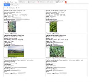 """Visualizzazione delle """"card"""" con le risorse genetiche orticole."""