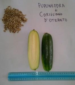 Frutto e semi di pupuneddra
