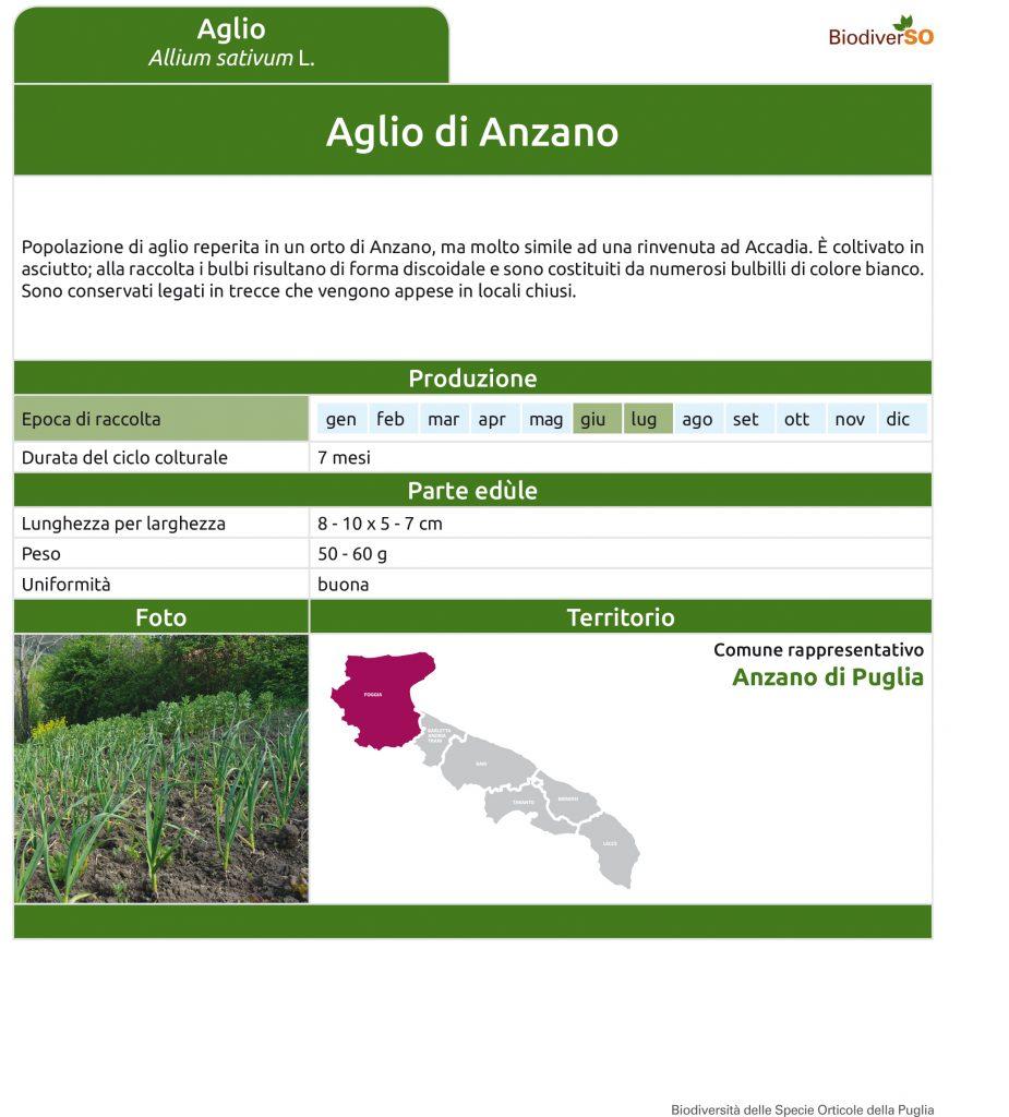 aglio-di-anzano-1