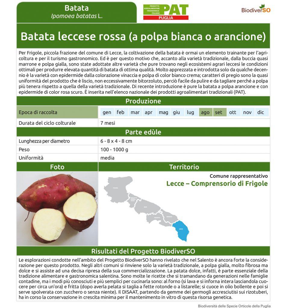batata-leccese-rossa-1