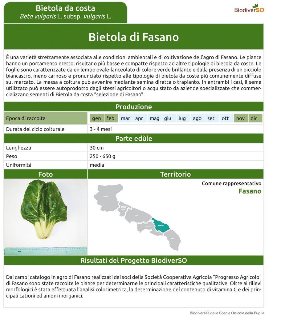 bietola-di-fasano-1