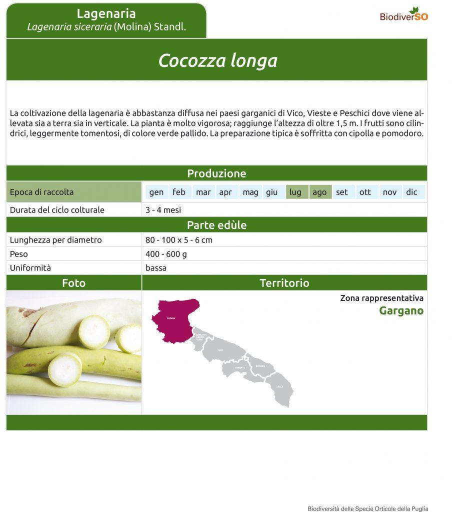cocozza-longa-1