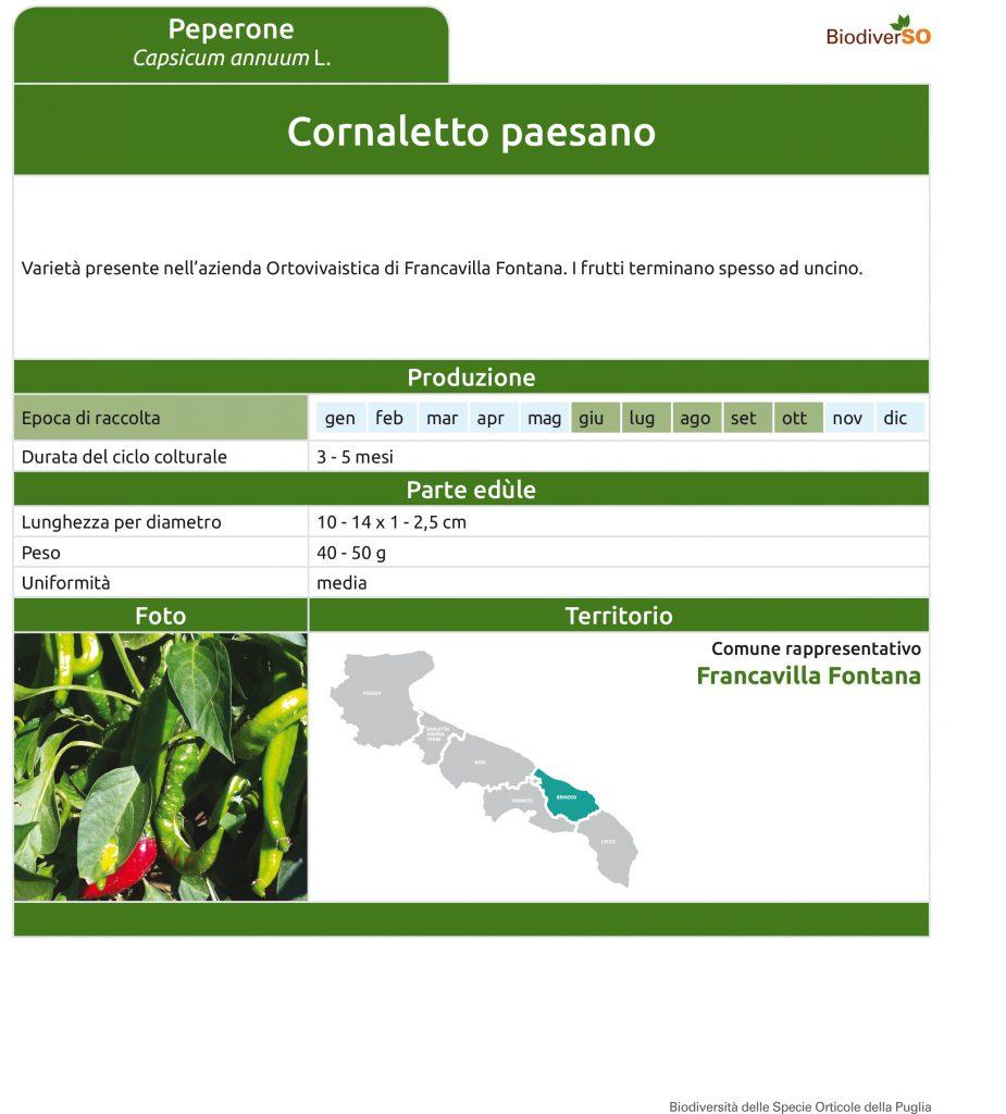 cornaletto-paesano-1