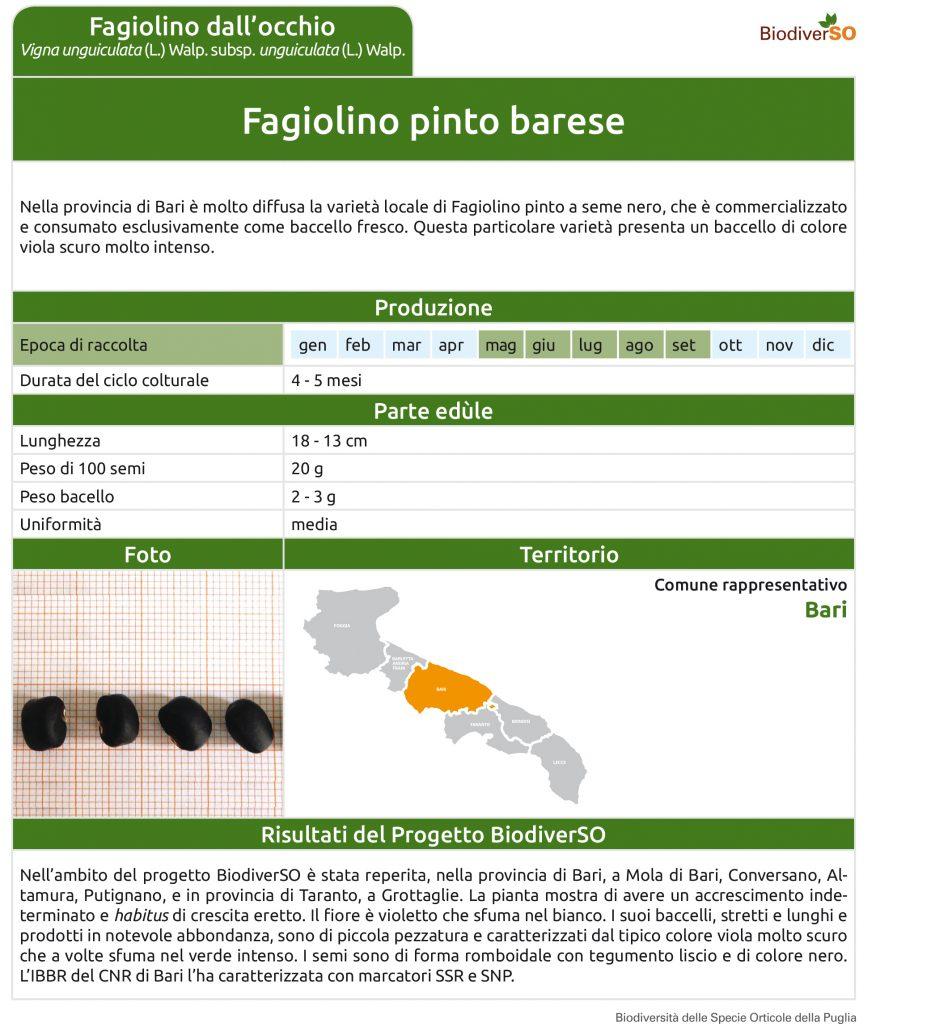 fagiolino-pinto-barese-1