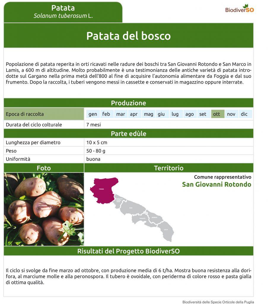 patata-del-bosco-1