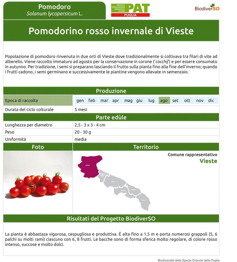pomodorino-rosso-invernale-di-vieste-1