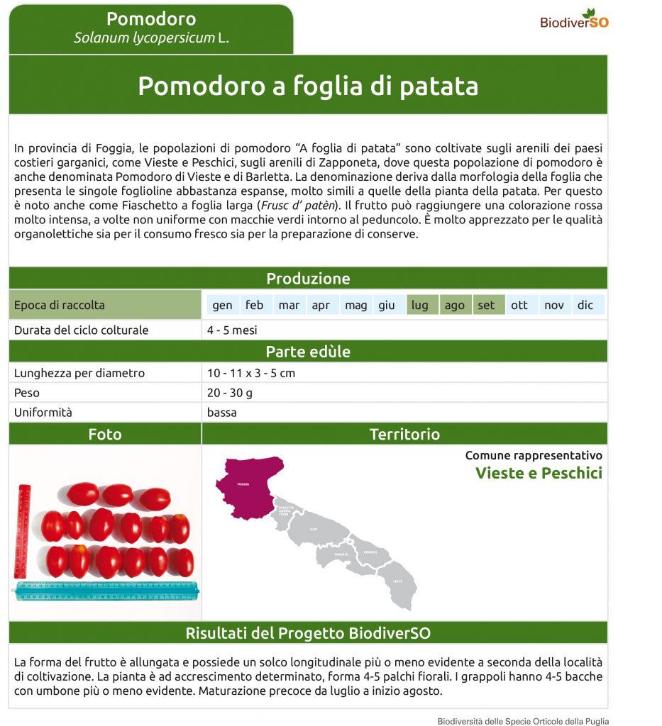 pomodoro-a-foglia-di-patata-1