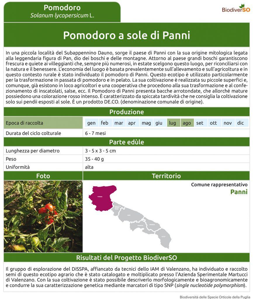 pomodoro-a-sole-di-panni-1