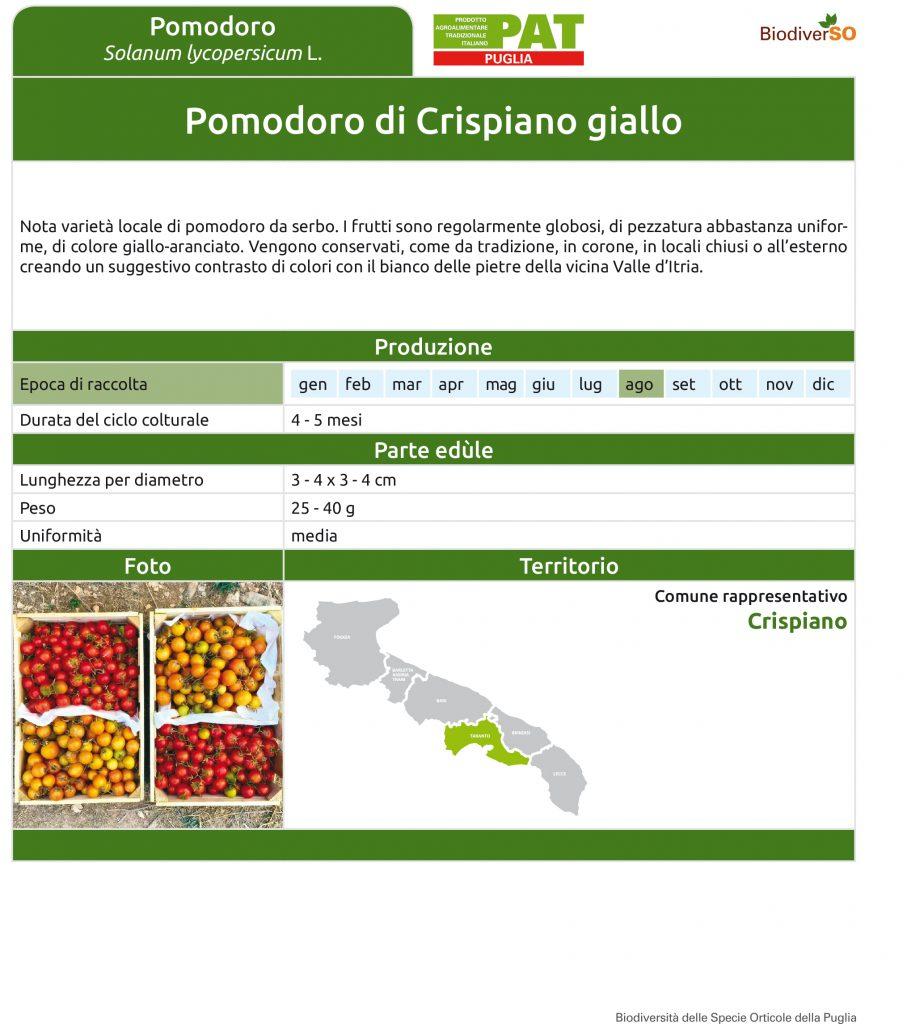 pomodoro-di-crispiano-giallo-1
