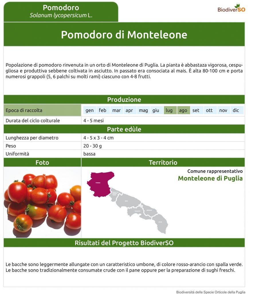 pomodoro-di-monteleone-1