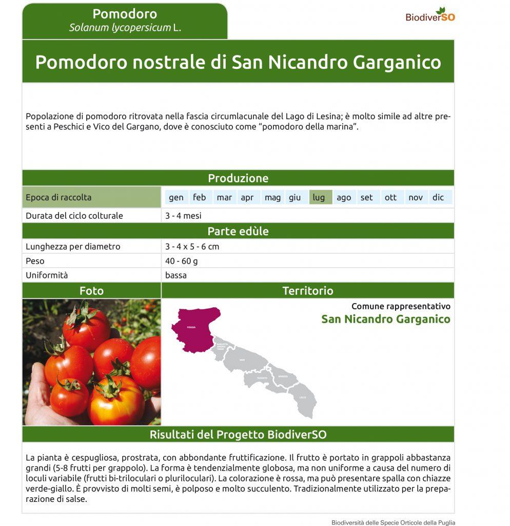 pomodoro-nostrale-di-san-nicandro-g-1