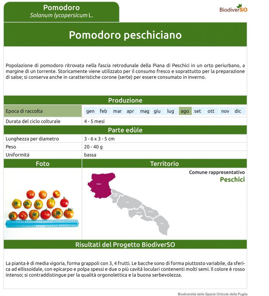 pomodoro-peschiciano-1