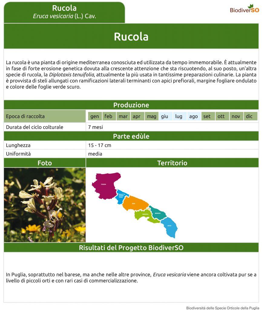 rucola-1