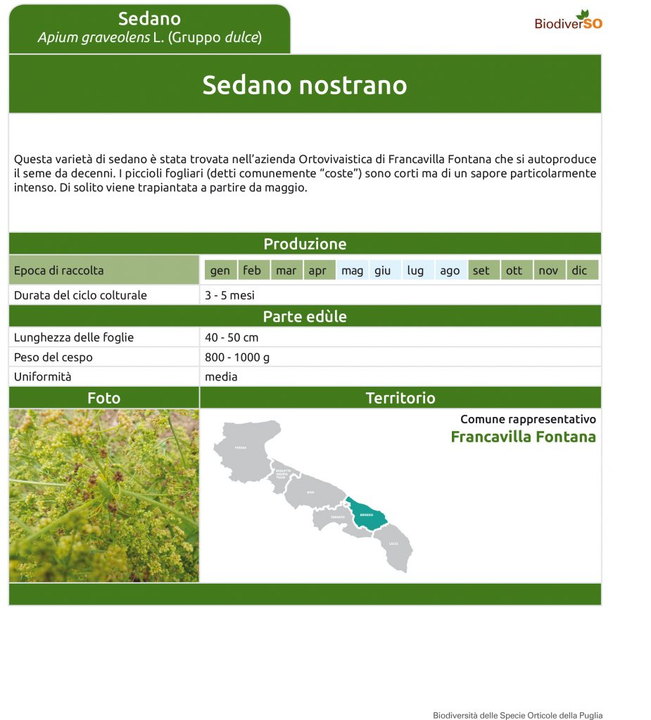 sedano-nostrano-1