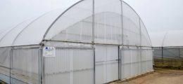 Consegnate le prime piante risanate al vivaio F.lli Corrado